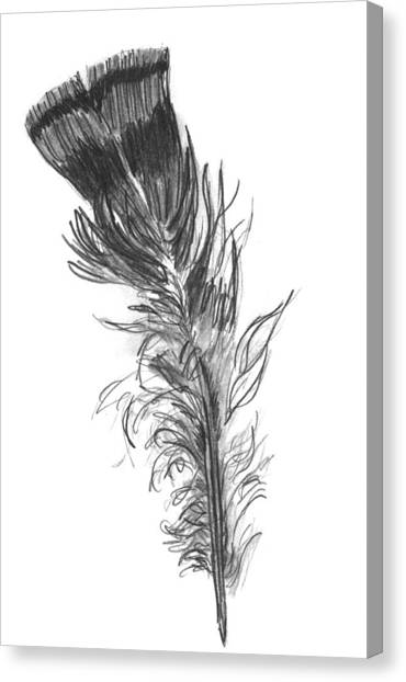 Wild Turkey Feather Canvas Print