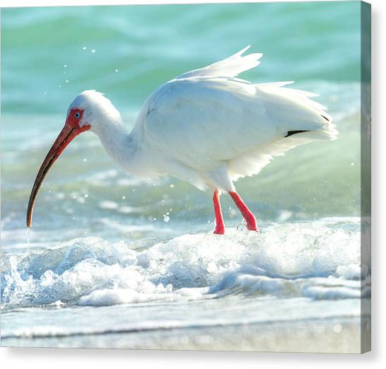 Ibis Canvas Print - Wild Winds by Betsy Knapp