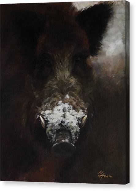 Wildboar With Snowy Snout Canvas Print