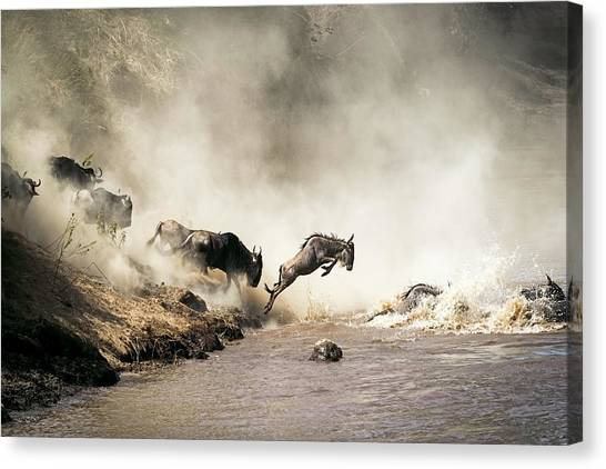 Jump Canvas Print - Wildebeest Leaping In Mid-air Over Mara River by Susan Schmitz
