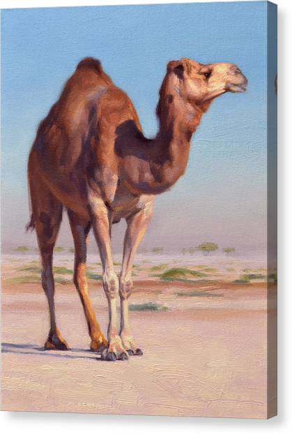 Arabian Desert Canvas Print - Wilderness Camel by Ben Hubbard