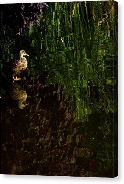 Wilderness Duck Canvas Print