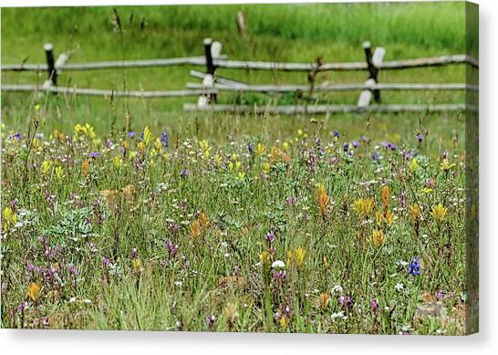 Wildflower Fence Canvas Print