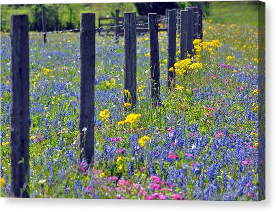 Wildflower Fenceline Canvas Print by Teresa Blanton