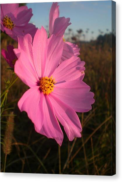 Wildflower Greeting The Day II Canvas Print by Wendy Robertson