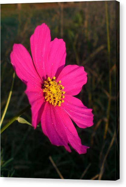 Wildflower Greeting The Day Canvas Print by Wendy Robertson