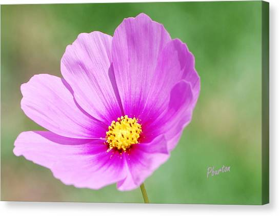 Wildflower II Canvas Print