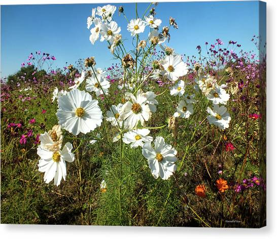 Wildflower Mania Canvas Print