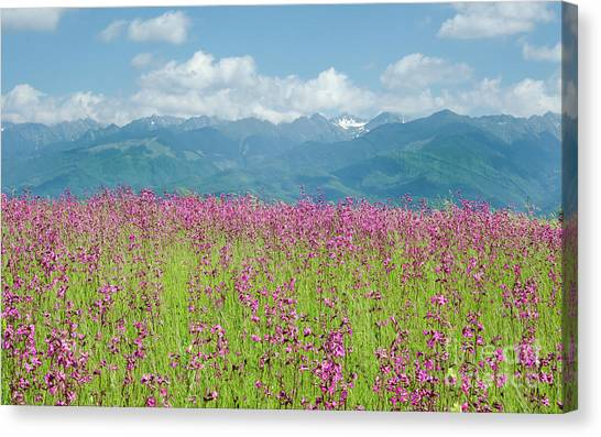 Wildflower Meadows And The Carpathian Mountains, Romania Canvas Print