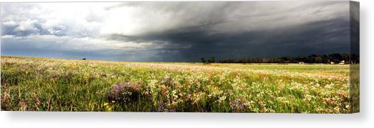 Wildflower Panorama 2008 Canvas Print