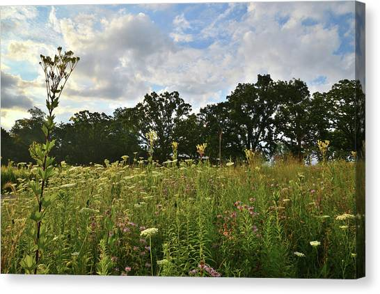 Prairie Sunrises Canvas Print - Wildflower Prairie In Glacial Park by Ray Mathis