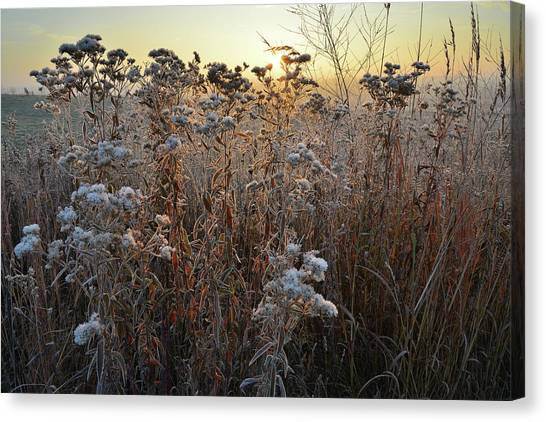 Prairie Sunrises Canvas Print - Wildflower Shadows At Sunrise In Glacial Park by Ray Mathis
