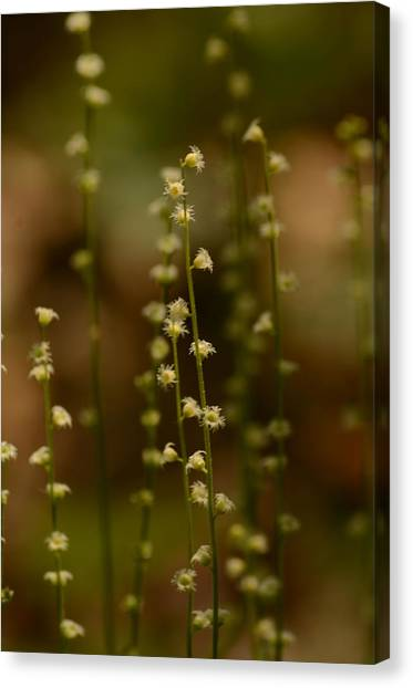 Bishop Hill Canvas Print - Wildflowers 1 by Maria Suhr