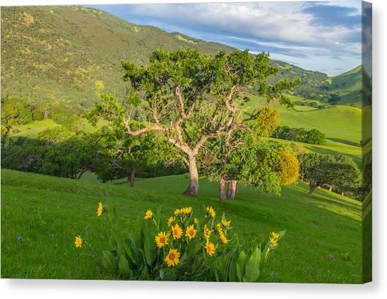 Wildflowers Above Round Valley Canvas Print