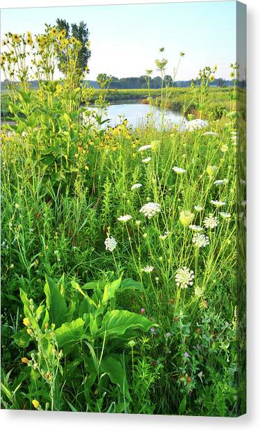Prairie Sunrises Canvas Print - Wildflowers Along Nippersink Creek Trail by Ray Mathis