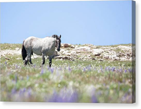 Wildflowers And Mustang Canvas Print