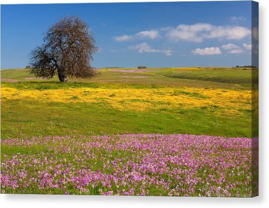 Shooting Stars Canvas Print - Wildflowers And Oak Tree - Spring In Central California by Ram Vasudev