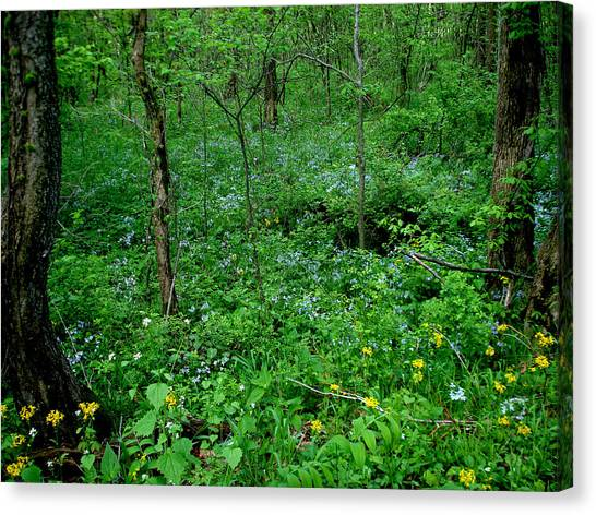 Wildflowers And Woods Canvas Print by Martin Morehead