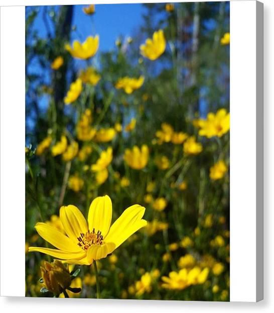 Okefenokee Canvas Print - Wildflowers At The Okefenokee :0) by Karen Breeze