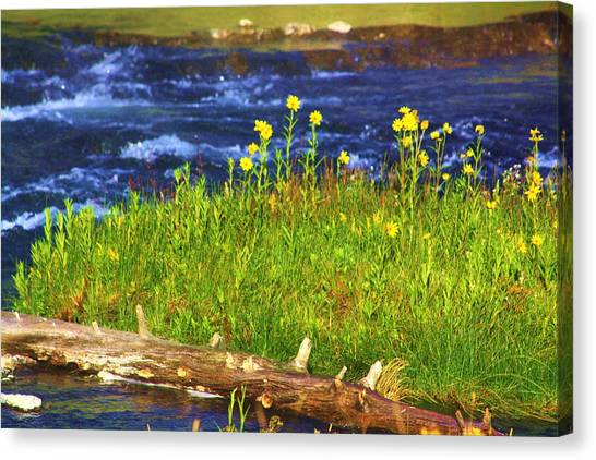 Wildflowers By The River Canvas Print by Russell  Barton