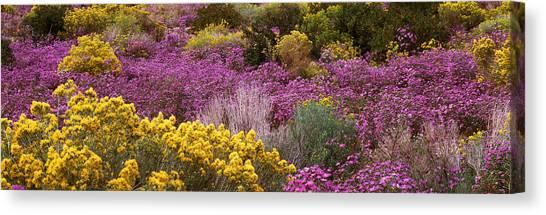 Prado Canvas Print - Wildflowers El Prado Nm by Panoramic Images