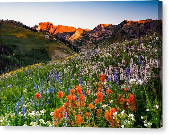 Wildflowers In Albion Basin. Canvas Print