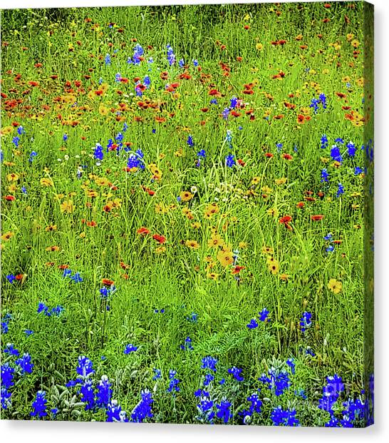 Canvas Print featuring the photograph Wildflowers In Bloom by D Davila