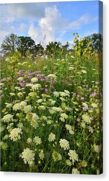 Prairie Sunrises Canvas Print - Wildflowers In Lost Valley In Glacial Park by Ray Mathis