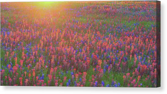 Wildflowers In Texas Canvas Print