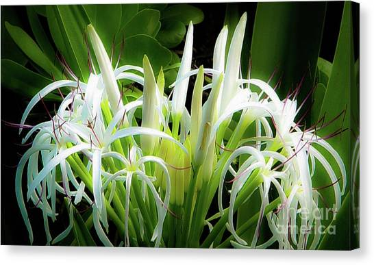 Canvas Print featuring the photograph Wildflowers Of Hawaii by D Davila