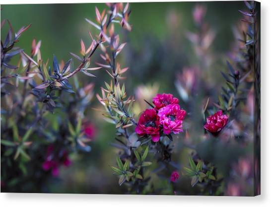 Wildflowers On A Cloudy Day Canvas Print