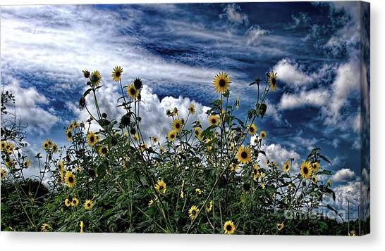 Wildflowers On The Brazos Canvas Print