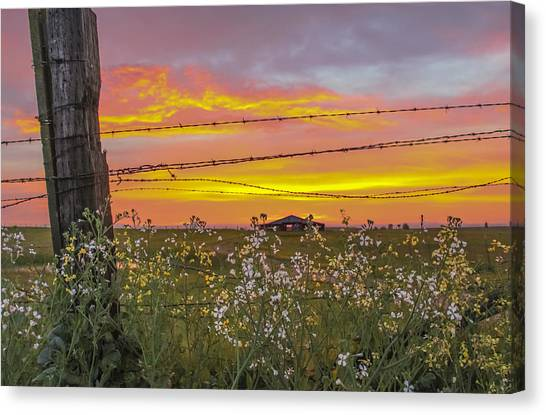 Wildflowers On The Ranch Canvas Print