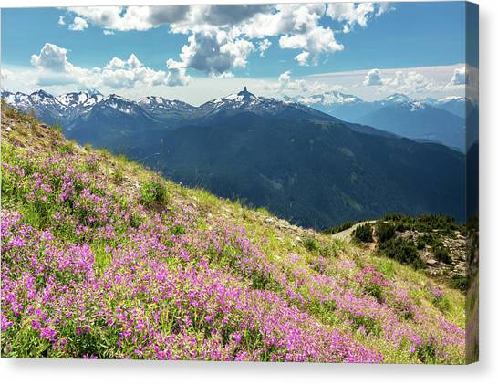 Canvas Print featuring the photograph Wildflowers On Whistler Mountain by Pierre Leclerc Photography