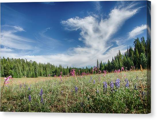 Wildflowers Reach For The Sky Canvas Print