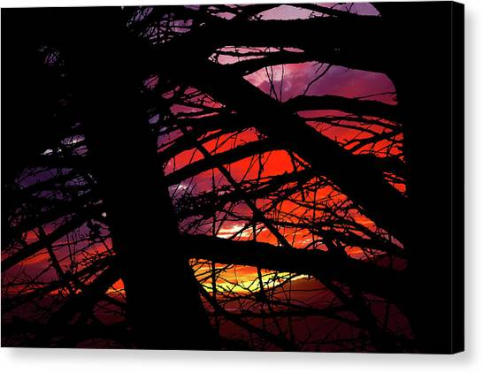 Wildlight Canvas Print