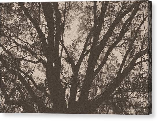 Wilds Of Myakka 005 Canvas Print