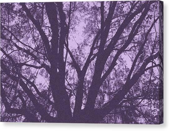 Wilds Of Myakka 006 Canvas Print