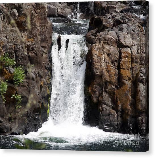 Wildwood Falls Canvas Print