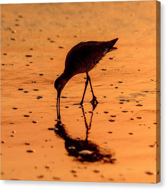 Canvas Print featuring the photograph Willet On Sunrise Surf by Steven Sparks