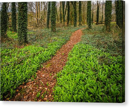 William Butler Yeats Woods Of Coole Park Canvas Print