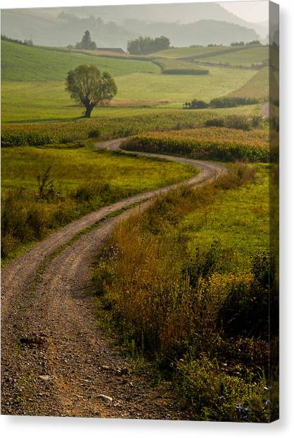 Field Canvas Print - Willow by Davorin Mance
