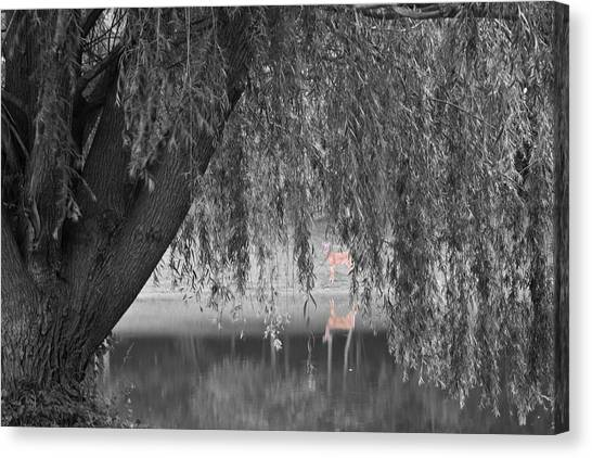 Canvas Print featuring the photograph Willow Deer II by Dylan Punke