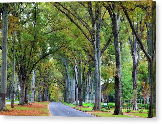 Willow Oak Trees Canvas Print