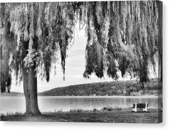 Weeping Willows Canvas Print - Willows Of Lake Cayuga by Jessica Jenney