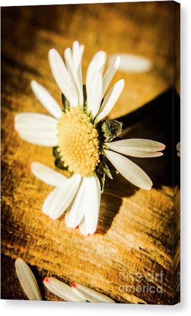 Daisy Canvas Print - Wilt by Jorgo Photography - Wall Art Gallery