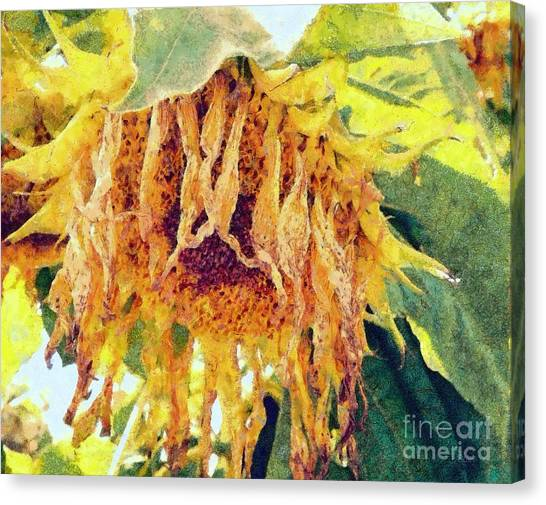 Wilted Sunflower - What A Day Canvas Print by Janine Riley
