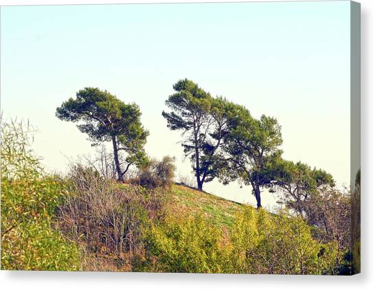 Wind Blown Trees Canvas Print