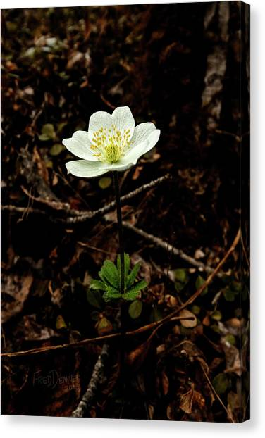 Canvas Print featuring the photograph Wind Flower by Fred Denner