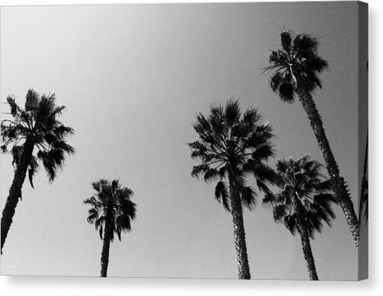 Miami Canvas Print - Wind In The Palms- By Linda Woods by Linda Woods